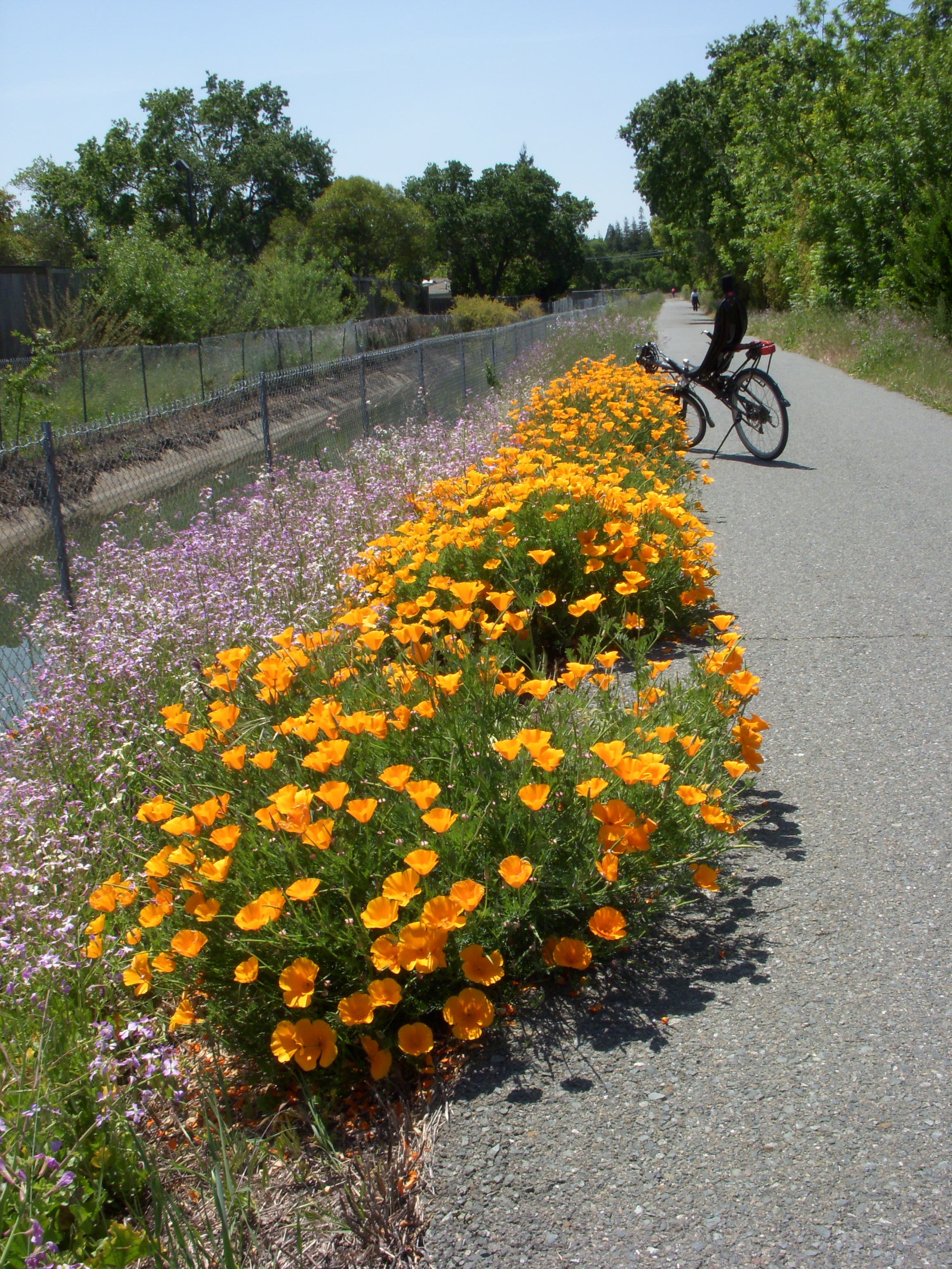 bike path wildflowers